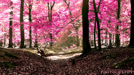 Welcome to the pink forrest