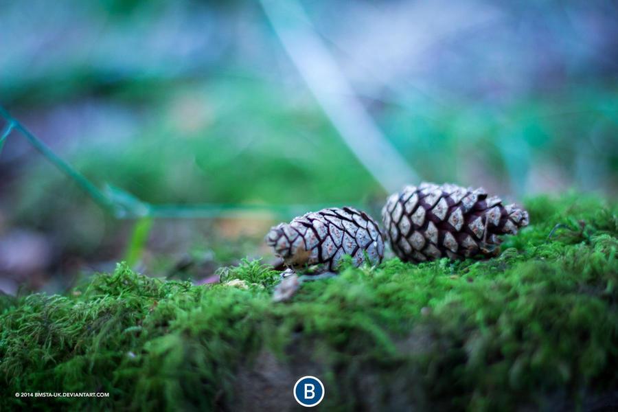 Pine Cones by bmsta-uk