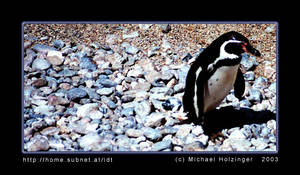 pinguine by mailfor