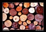 woodstoprt