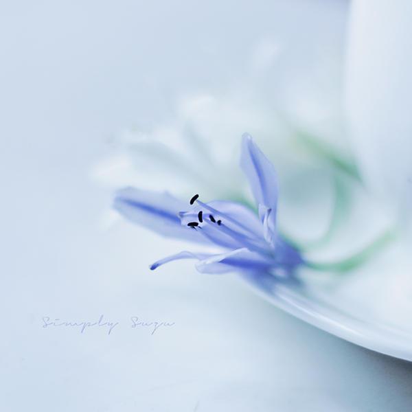 Hush by simplysuzu