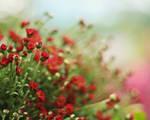 Hope is where flowers bloom
