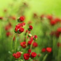The feeling of flowers by simplysuzu