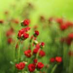The feeling of flowers