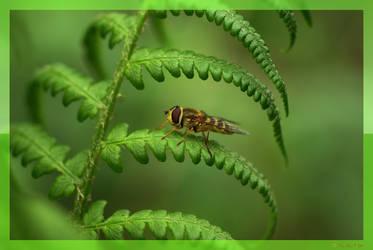 Bee on Green