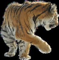 Precut Tiger 1 by windfuchs
