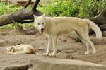 2013 August: Wolves in Berlin 5