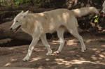 2013 August: Wolves in Berlin 30
