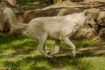 2013 August: Wolves in Berlin 31