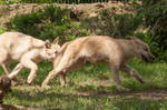 2013 August: Wolves in Berlin 55