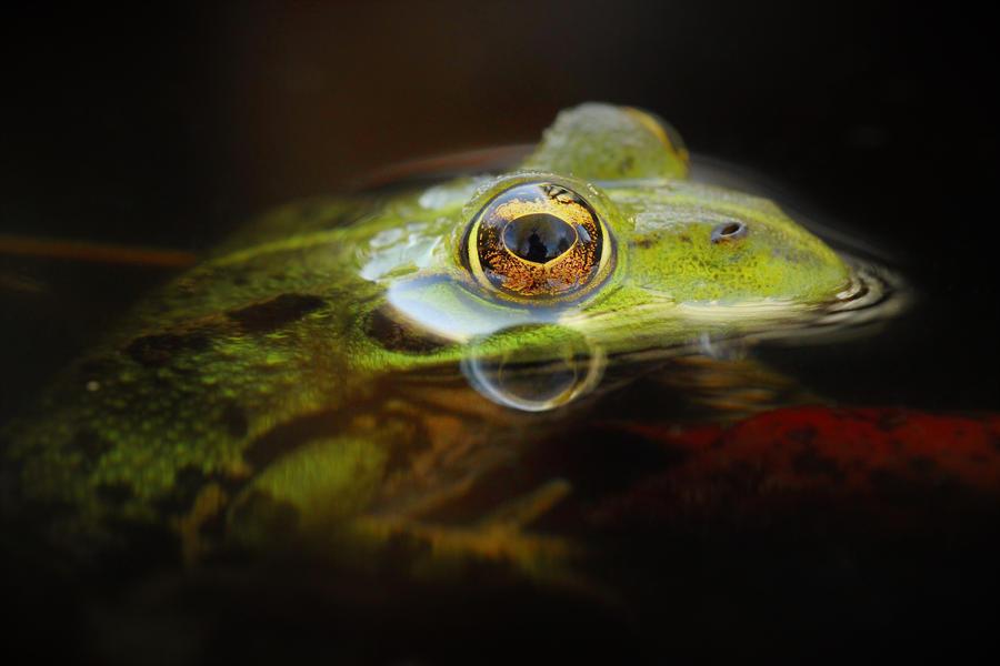 Illuminated frog...