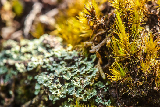 Miniature forest