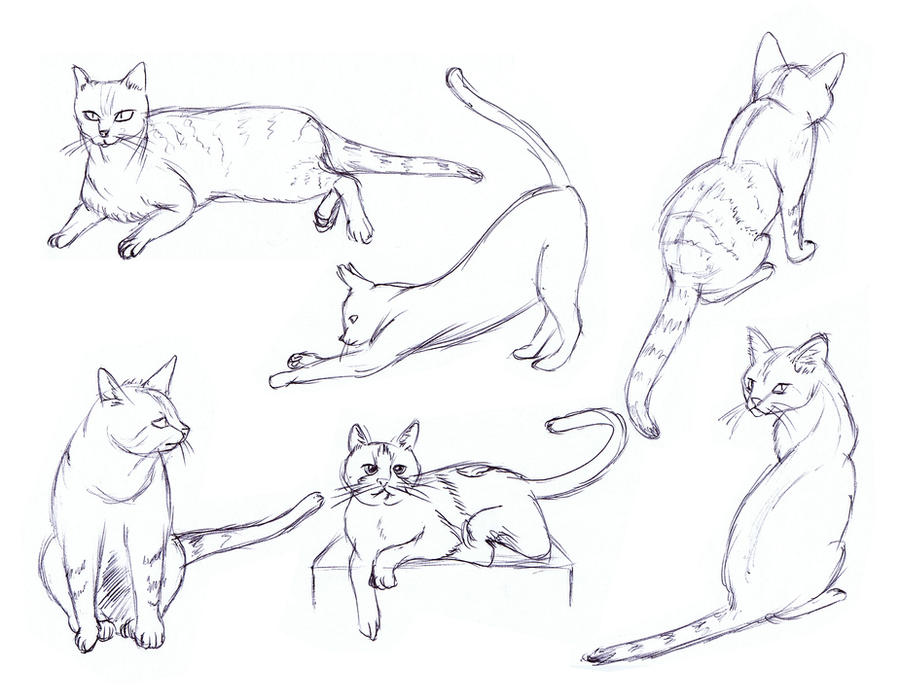 cat sketches 01 by budraw