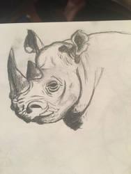 Rhino on paper