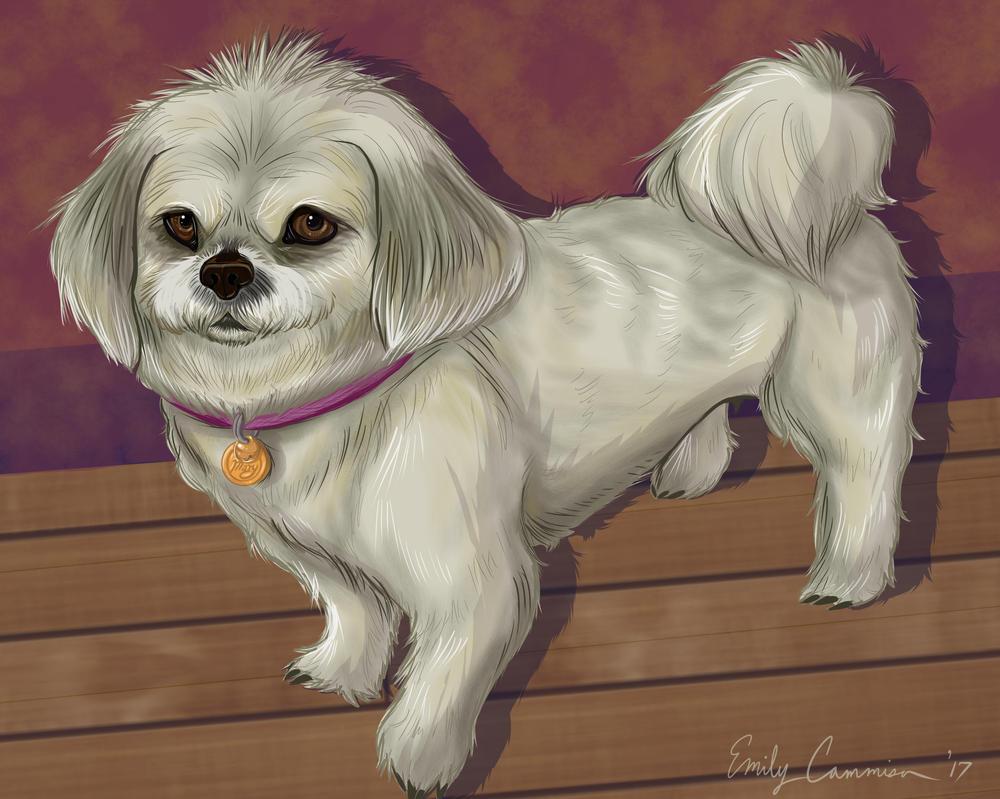 Mary the Lhasa Apso Dog by EmilyCammisa