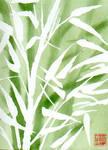 spring bamboo