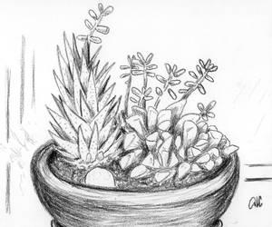 succulents by acasas