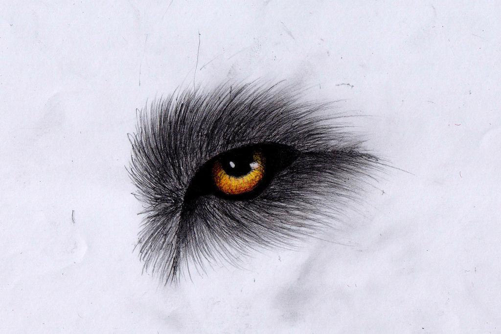 Wolf eye by PandorasWolf on DeviantArt