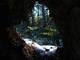 Hole in tree trunk by William1987