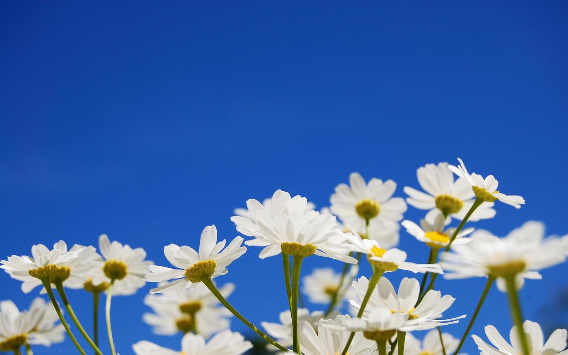 It's a sky flower thing by lassekongo83