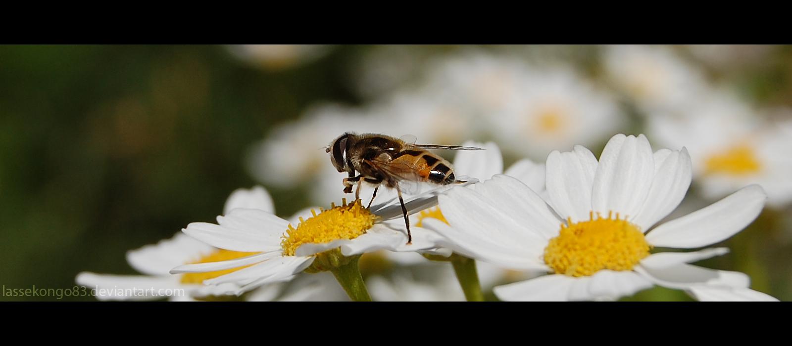 Nectar plz by lassekongo83