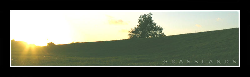 Grasslands by lassekongo83