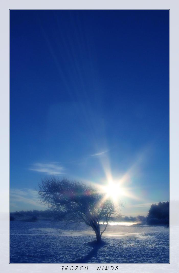 Frozen Winds by lassekongo83