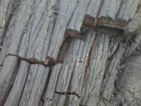 Lava Bark