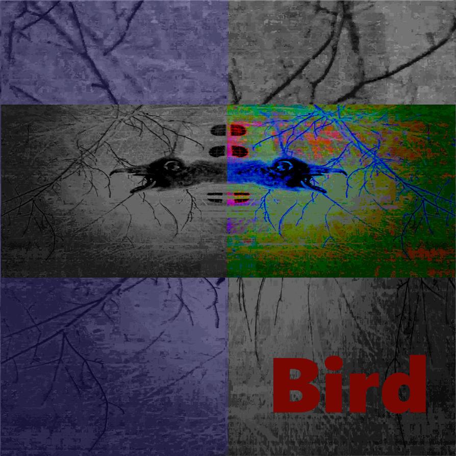 Bird by LuInSkWiDi