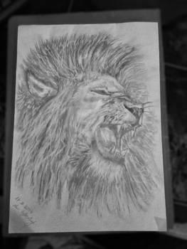 Lion Roar Draw