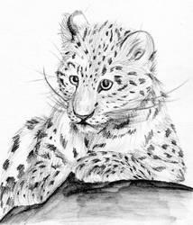Amur Leopard by Nakatu
