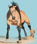 Horse Study?