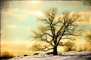 my magic tree by ashapiro515