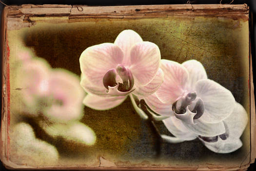orchids take a curtain call