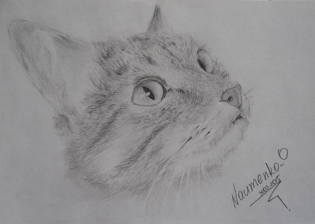 Cat Pencil Drawing by NaumenkoO on DeviantArt
