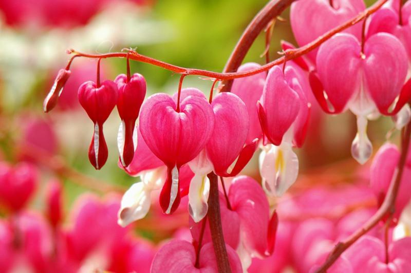 Flowers by lightsugar