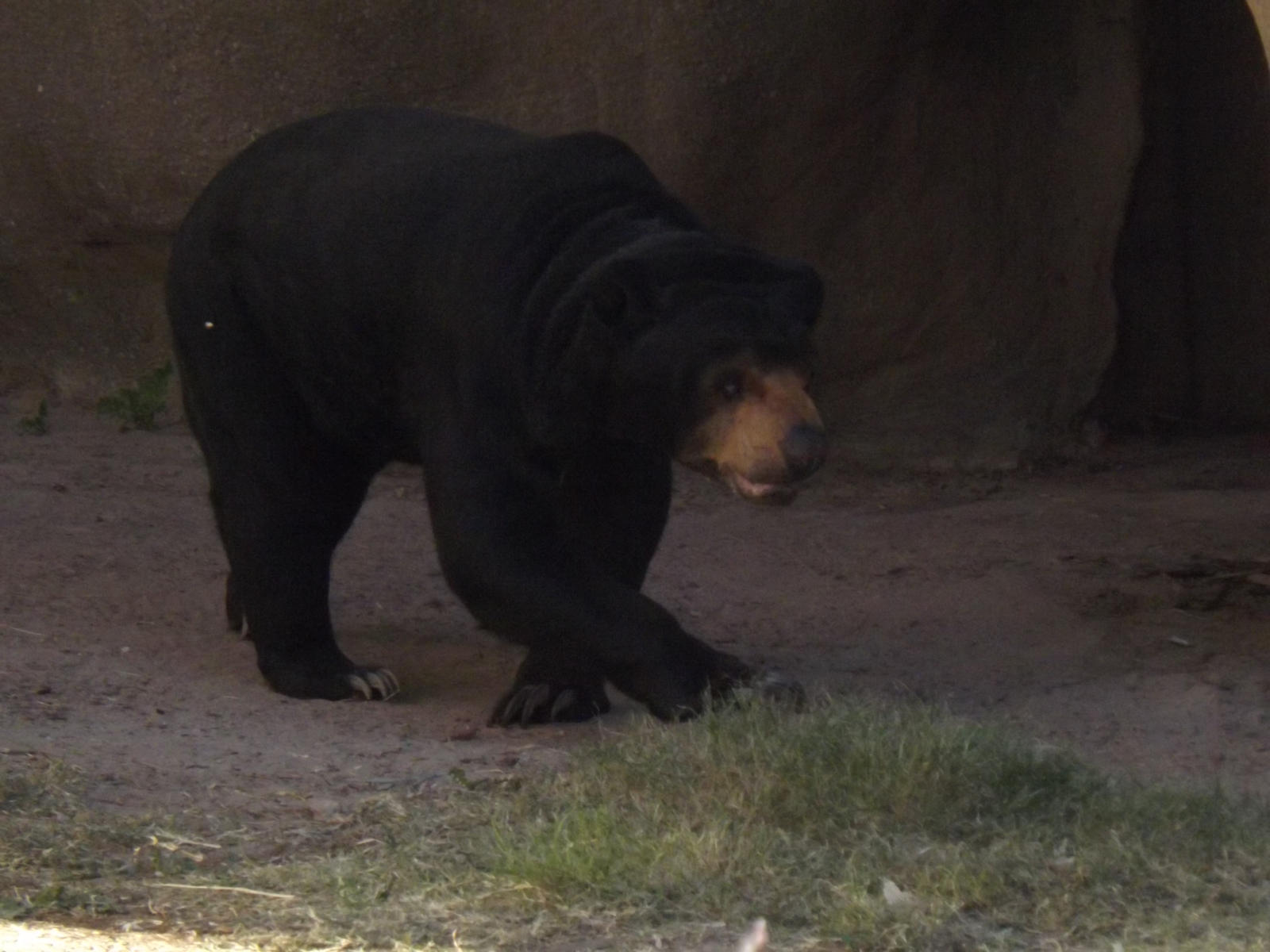 Sun Bear by Deede25