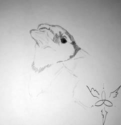 Blue Jay Sketch