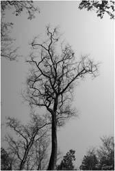 leafless tree I by strangerinthecrowd