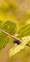 Naughty Bugs