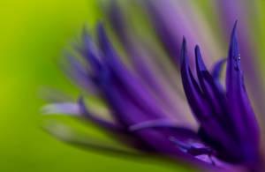 Tumma Violetti by AneurysmGuy