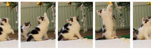 Kitten Playing Snapshot