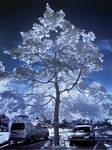Puu Parkkipaikalla