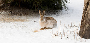 Snapshot of a Rabbit or a Hare