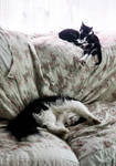 Lazyboy And Kittens