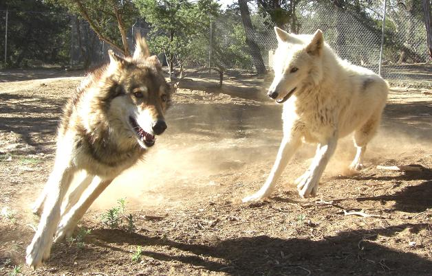 Nascar Lani by Wolf-of-Samhain