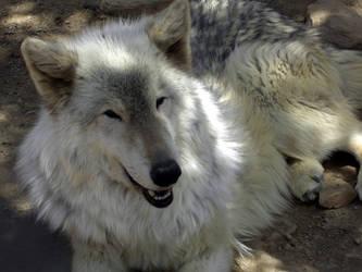 Hey Beautiful by Wolf-of-Samhain