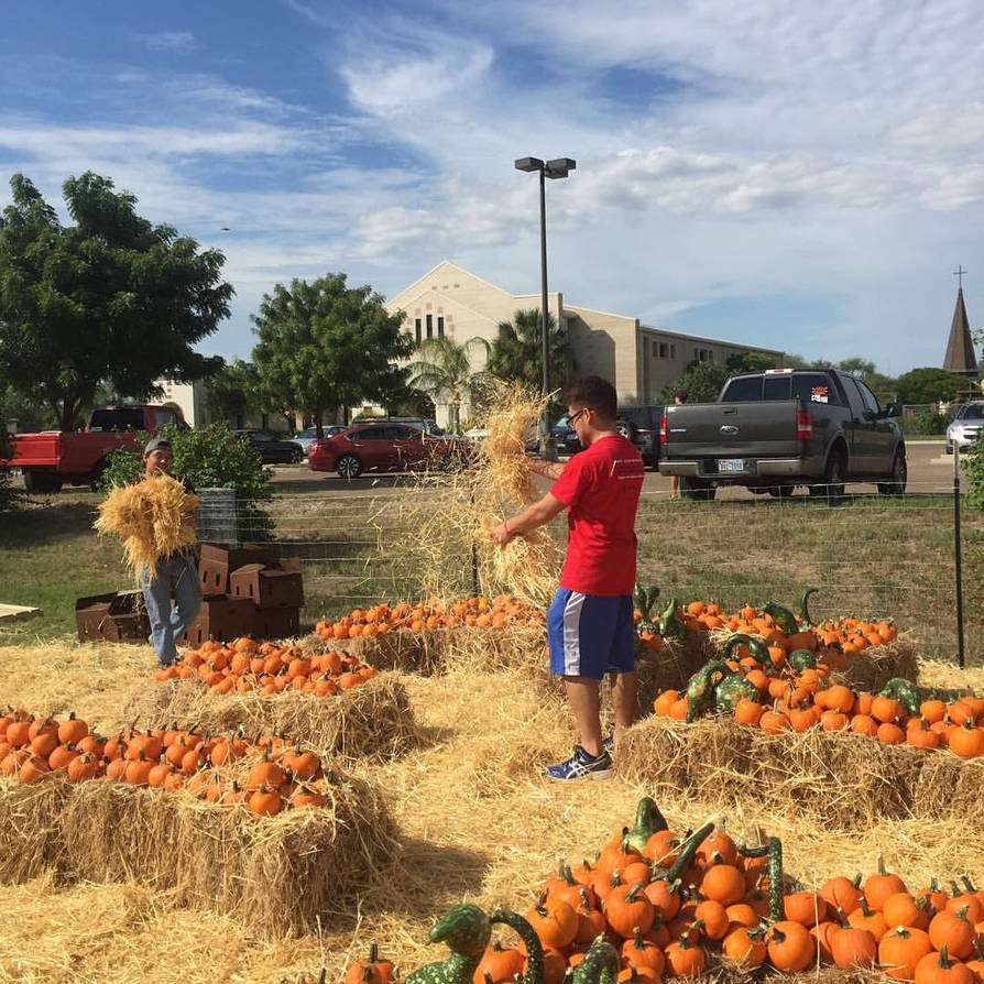 A man dropping hay in the pumpkin patch