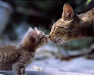 amor de familia by felinos-FC