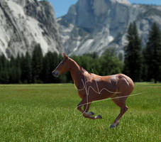 Your Horse Here } open (500 points)